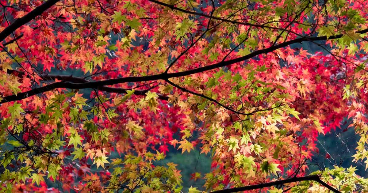 滑床渓谷紅葉