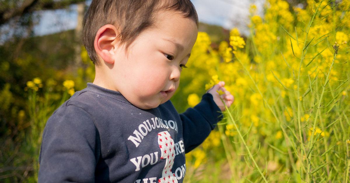 ひーくんの春さんぽ|つくし、菜の花、桜、タンポポ。