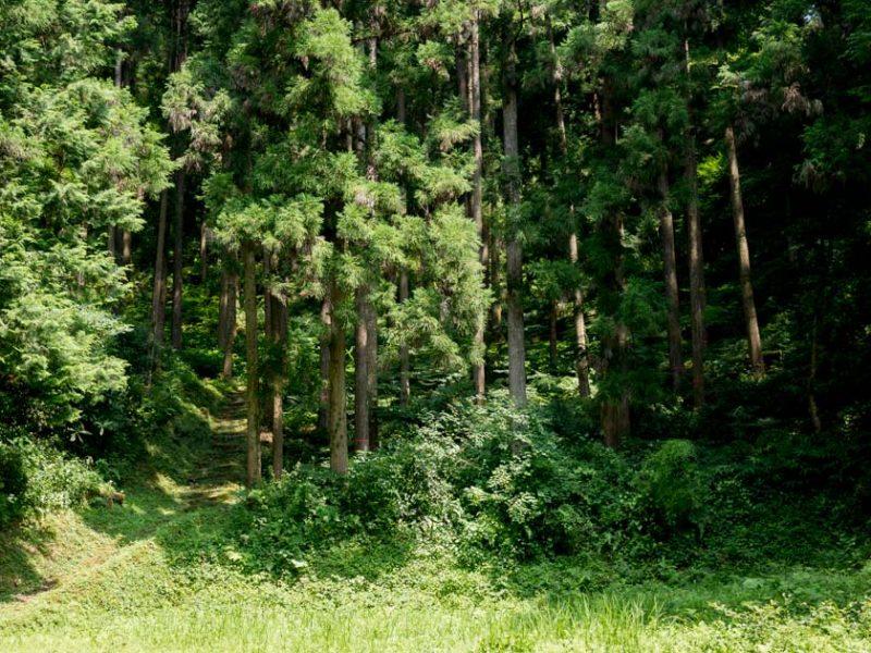 【かごもり】河後森城にのぼってみた!|愛媛|松野町