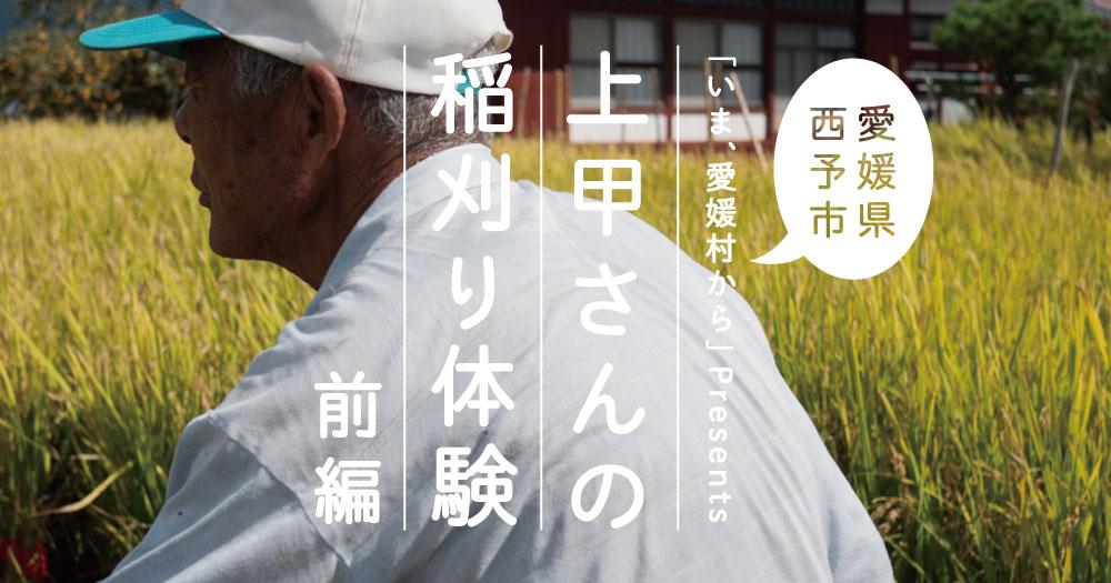 西予|上甲さんの稲刈り体験!〈前編〉|愛媛村から