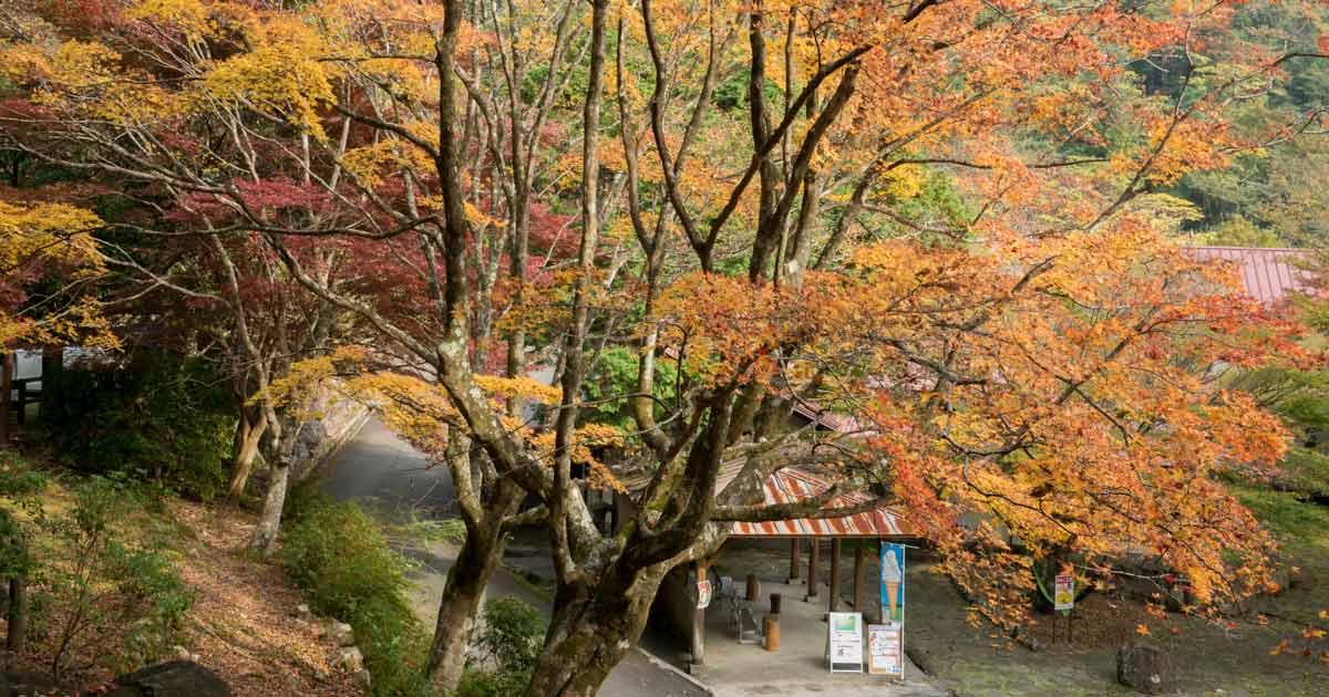 松野町|滑床渓谷の紅葉狩りなら万年荘!|愛媛