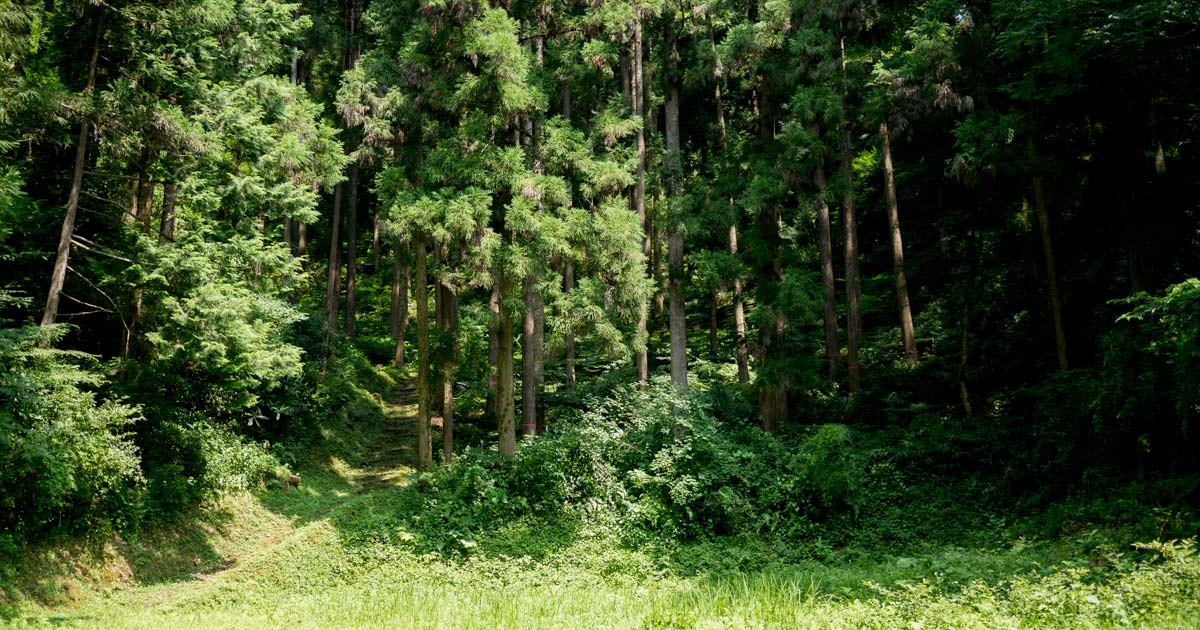 松野町【かごもり】河後森城にのぼってみた!|愛媛