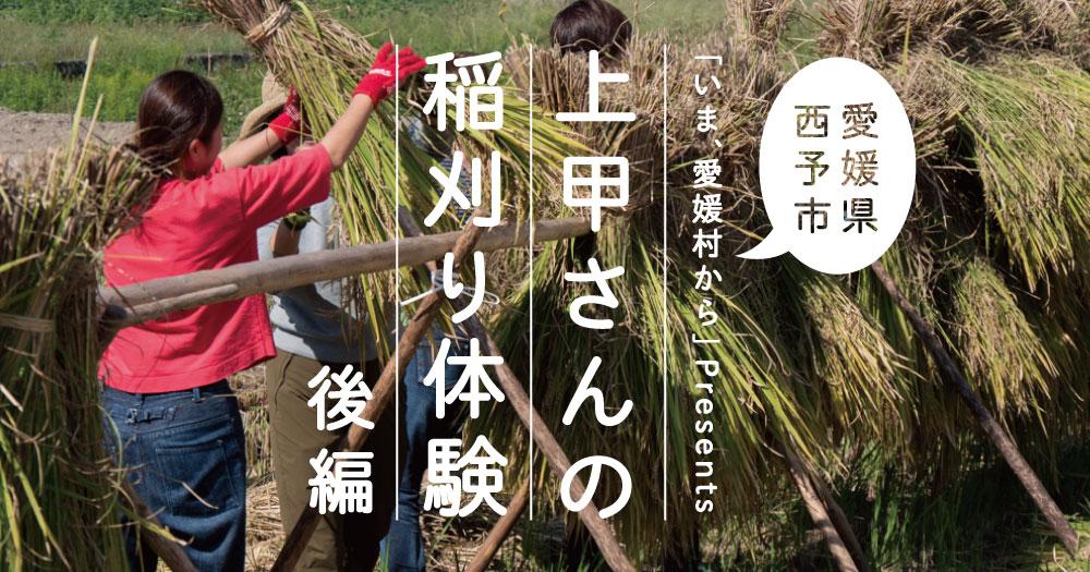 西予|上甲さんの稲刈り体験!〈後編〉|愛媛村から