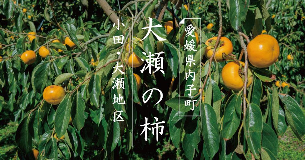 内子町|大瀬の柿|小田・大瀬地区