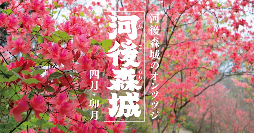 松野町|河後森城のオンツツジ|四月